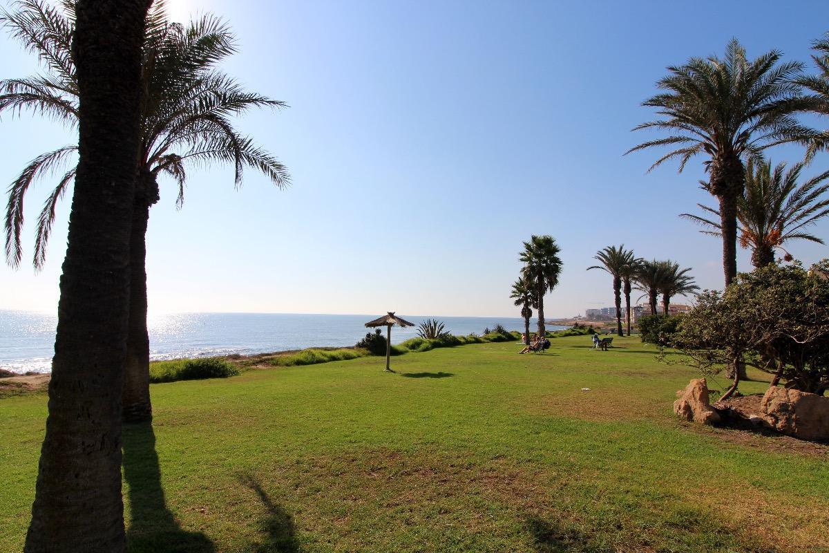 Spain palm-trees